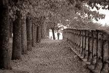 row-of-trees