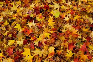 2007_11_leaves