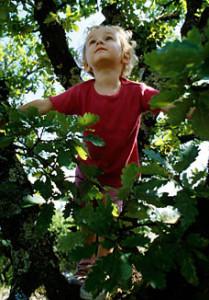 child-climbing-tree
