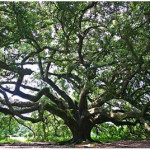 family tree and roots
