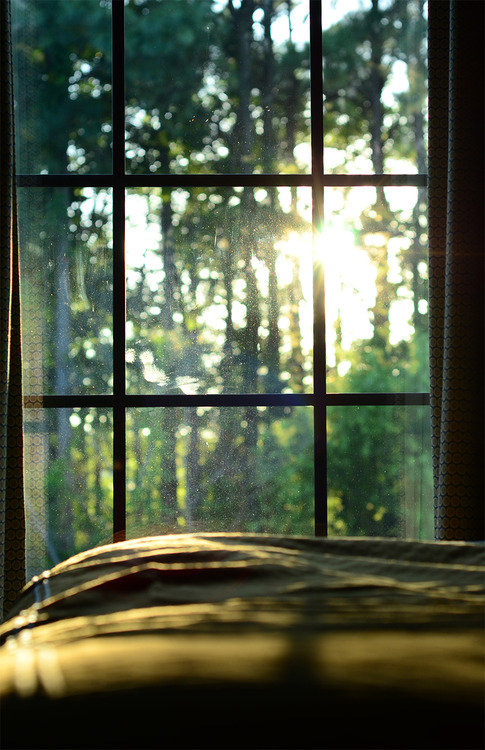 sun_shining_through_the_trees_and_window