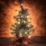 Christmas joys
